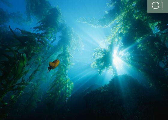 Фотопечать на натяжных потолках, имитирующая подводный мир