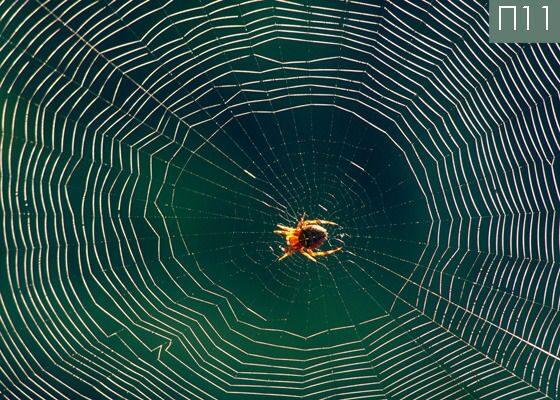 Художественный натяжной потолок с паутиной и пауком