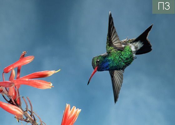 Натяжной потолок с колибри на фоне голубого неба